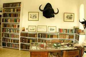 "Feb. 11, 2009: Hemingway's ground floor study at Finca Vigía. The guides claim the buffalo head mounted on the wall provided the inspiration for ""The Short Happy Life of Francis Macomber,"" but I rather doubt it."